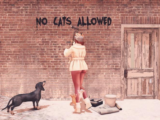 1 No Cats Allowed sm