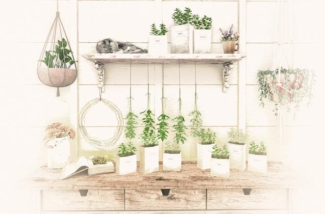 1-herbal-dreams-sm